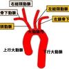 【基礎から学ぶ】神経による血圧の調整(頸動脈洞反射)【解剖生理学】