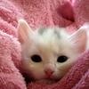 いちばん大切なのは、猫との信頼関係 ~猫に甘噛みをさせちゃだめ(後編)~
