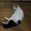 愛猫彷徨娘マロ子ちゃんのタッチ&ゴー?