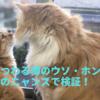 猫にまつわる噂のウソ・ホントを我が家のニャンズで検証!