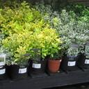 小さな園芸店のブログです。