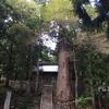 白馬村「細野諏訪神社」の御神木は樹齢1000年を超える大杉