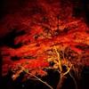 真朱と漆黒の世界♪山中湖の紅葉祭り