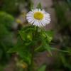 雑草の花,雑草の花……と思っていたら,庭が草ぼうぼうに。自然ってすごい。