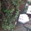 神戸元町物語 本当に大人の空間 茶房あじさい