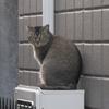 猫の世界も無常