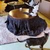 【まさに天国!】猫の居る休憩所299に挑戦