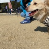今日も草加公園ドッグランで遊び
