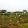 神原町花の会(花美原会)(224)       華やかな花畑を彩るかげの協同活動