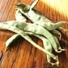 菜園報告。「刀豆とりました。」