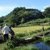 上瀬谷小学校の稲刈りは無事終了!