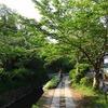 大文字山ハイキングから銀閣寺へ