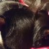 今日の黒猫モモの&白黒猫ナナの動画ー874