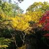 那谷寺の紅葉見てきました
