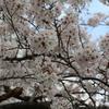 東京 Vol.4 <お花見・屋形船/皇居乾通り>