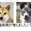 『いとしのムーコ』のムーコは、秋田県に実在する。
