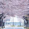 2020年3月29日(日) 桜が満開なのに東京に大雪が降った日の調布飛行場の話