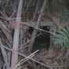 実家の近くに眠る ゲジ穴と呼ばれた防空壕跡(神奈川県某所)