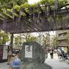 【大阪市・福島区】大開町にある「松下幸之助創業の地記念碑」の前でもノダフジが見れますよ~。