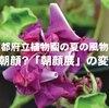 えっこれが朝顔なの?京都府立植物園の風物詩「朝顔展」の変化朝顔