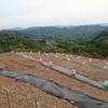 和歌山 スイカ畑 植え込み
