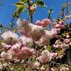 「道」のお話⑥~ 覚道の花、一花に無数の仏さまを感じて ~ 「法の水茎」106