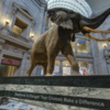 【VR×博物館】VRに取り組む博物館4選