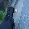Today's dogs - 今日の犬達&Lesson