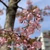 代官山から渋谷散策