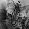 ベンガル 子猫のコテツ初めてのワクチン接種へ行く!