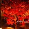 【カメラ】小さい秋見つけた☆