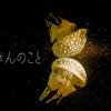 さいきんのこと 〜 秋 〜