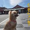 【わんこと旅】 大宰府天満宮 ≪福岡県≫