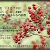 誕生花 11月29日 「野ばら」