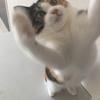 【愛猫日記】毎日アンヌさん#8