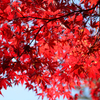 【福島】磐梯吾妻スカイラインを通って五色沼の紅葉を見に行こう!