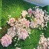 ≪本店3階≫LUFT 下田氏 による 『縁と円が織りなす桜ディスプレイ』