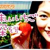 109食目「YouTube ep005 【くだものがたり】美味しいいちごを探そう!」