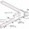 【医学部編入】生命科学講義・DNAの複製② ~複製フォーク~