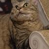 ライザップのネコと電子シャッター