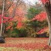 雨の宮川渓谷の紅葉