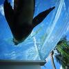 水族館の生き物をコンデジで撮るためのコツ