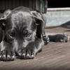 悩みの値段を考えたことありますか? ~愛犬の闘病、もう一つの側面(3/4)~