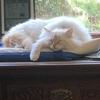 イチジクの季節:炭酸水問題解決:猫はつるの?