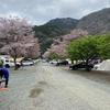 花見キャンプin青野原