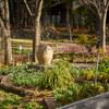 1日後の花の文化園