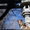 今年の初詣も市谷亀岡八幡宮へ