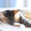 猫と寝すぎた日曜日。