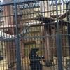 【横浜】ペーパードライバーでも行ける観光スポット しかも無料! 野毛山動物園