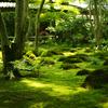 祇王寺の新緑Part3